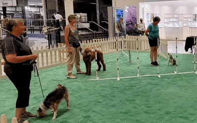 SREG's Mall at Fox Run Welcomes The Community's Furry Friends For A Yappy Hour